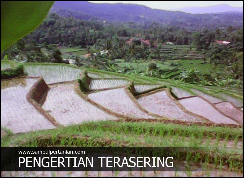 Pengertian Terasering Atau Sengkedan Dalam Pertanian