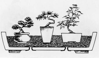 bonsai mini dep, cham soc bonsai mini theo nao, cach cham soc, bonsai mini, ky thuat cham soc bonsai mini
