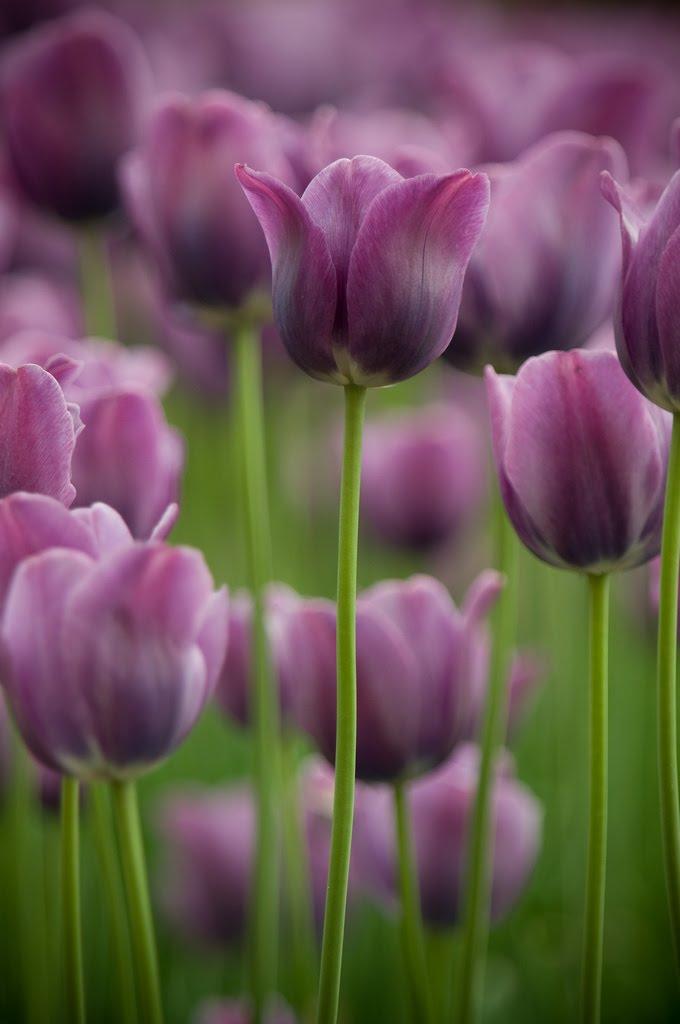 purple-Incluso en los días más grises, incluso en los momentos más