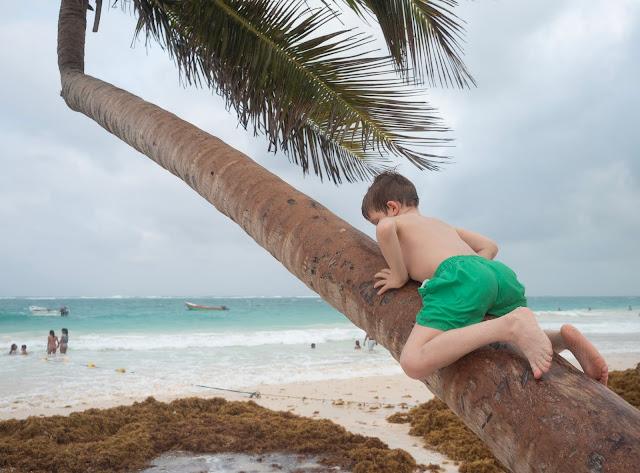 Niño con bañador verde subido a una palmera en la playa