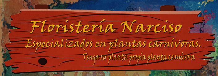 cartel floristeria narciso