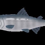 サケ�イラスト(魚)