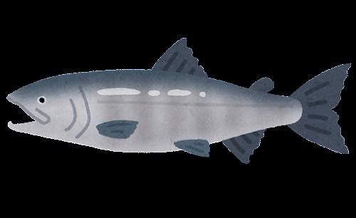 サケのイラスト(魚)