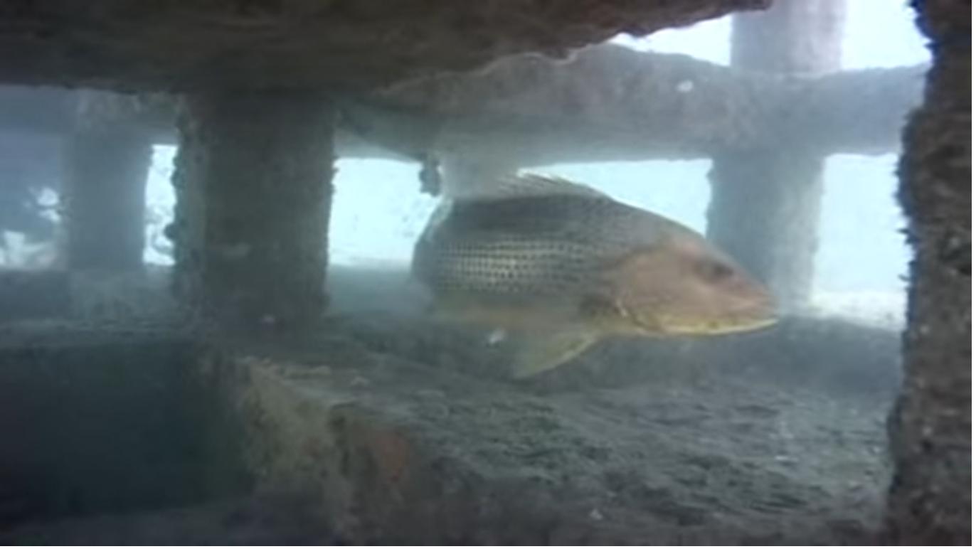 Jom Mancing Bersama Di Port Klang Sekadar Informasi Ikan