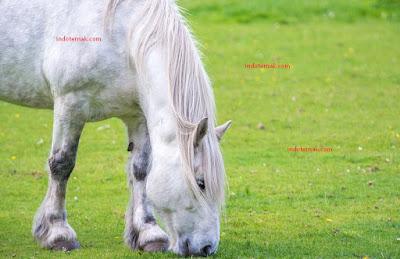 Deskripsi Kuda Andalusia Sejarah kuda lambang Keanggunan