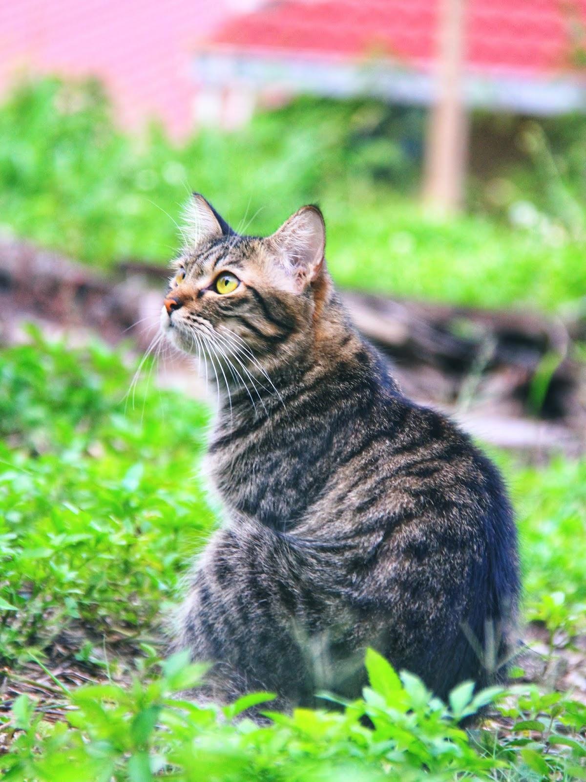 20 Koleksi Gambar Kucing Comel Bernama Tambi 20