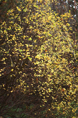light in golden leaves in the forest