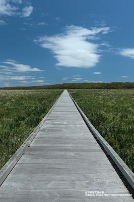 北方原生花園木道 ≪Hoppou Natural Flower Garden Boardwalk