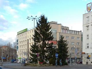 choinka, Gdynia, święta,