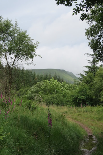 A mountain ridge appearing beyond a line of trees at the forest edge.