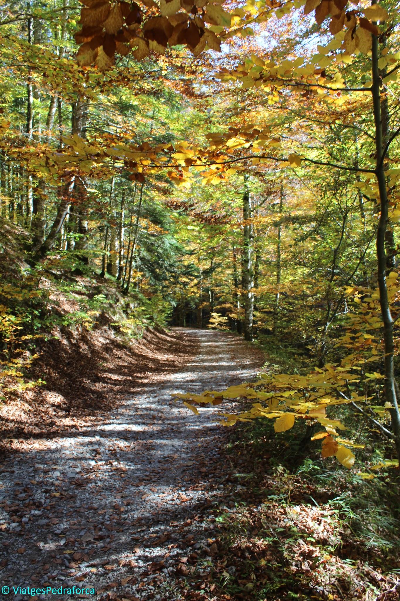 Selva d'Irati, Pirineu de Navarra, colors de tardor, senderisme