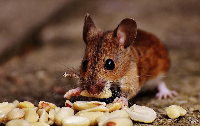 manipulador de alimentos-plagas-