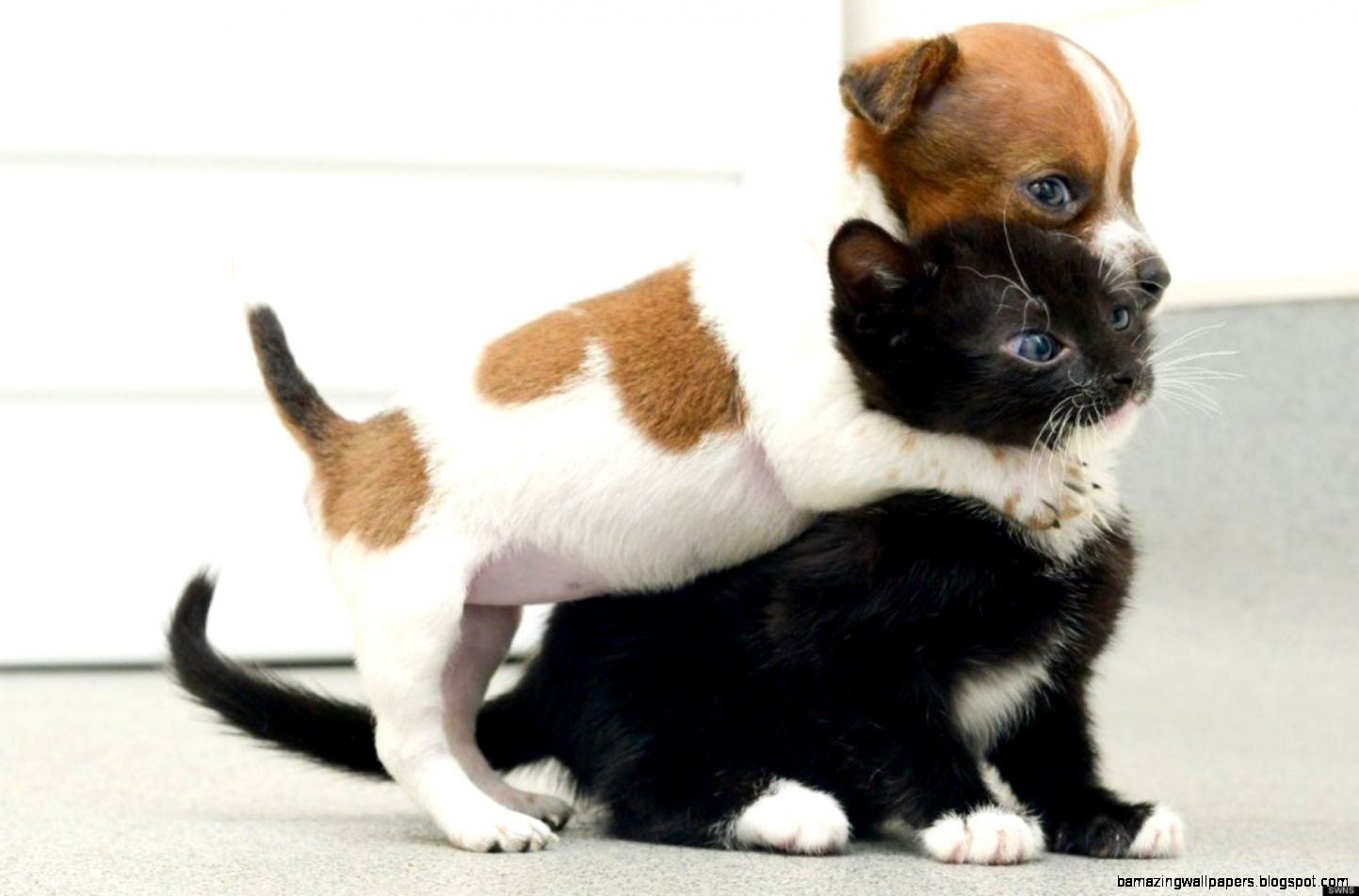 Cute Puppy And Kitten Gif Amazing Wallpapers