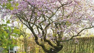 El jardín de Nina Balthau: un cuadro muy natural