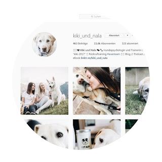 screenshot kiki und nala auf instagram labrador