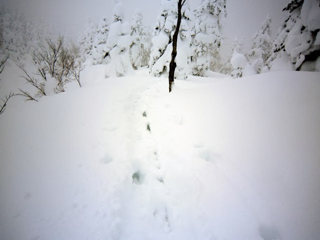 深雪を単独ラッセル。