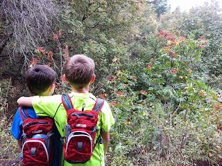 BabcoUnlimited.blogspot.com - Family, Hike Utah