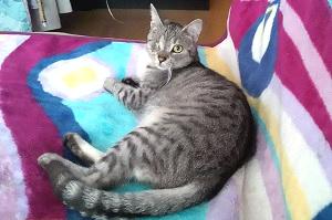 Natasza kot do adopcji Wroclaw