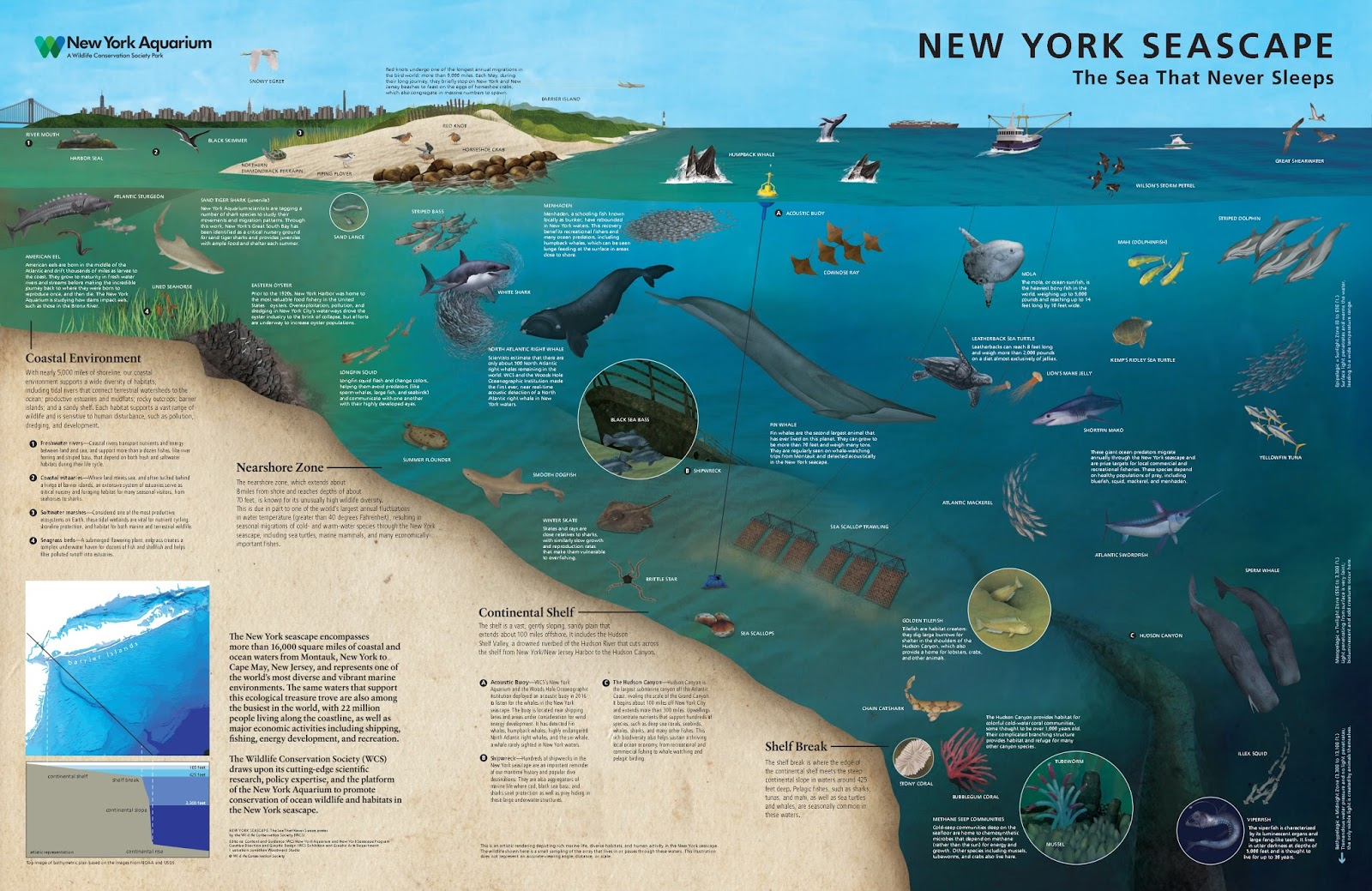 Explore the New York Seascape