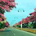 """""""Sakura Utara"""" Kembali Indahkan Landskap Darul Aman"""