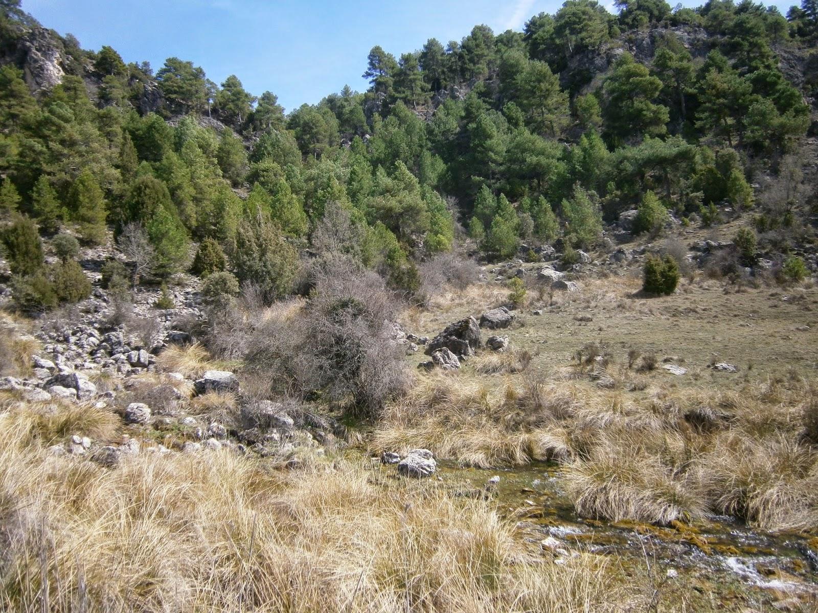 Nacimiento de la Cascada Tobacea Valdemoro Sierra, Autor: Miguel Alejandro Castillo Moya