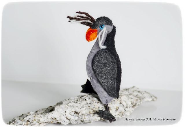 zgadka-pro-pticu-magija-biologii
