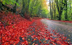 world best forest  hd wallpaper download43