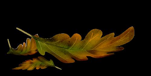 осень, лето, лес, травы, ветки, листья, разделители растительные, разделители с листьями, разделители с травами, разделители лесные, разделители осенние, разделители для текста, разделители, для веб-дизайна, для сайтов, для блога, оформление текста, для оформления, для текста, для интернета, для страниц, украшения графические, дизайн графический, декор, декор для постов, декор для сайта, картинки, картинки для сайта,