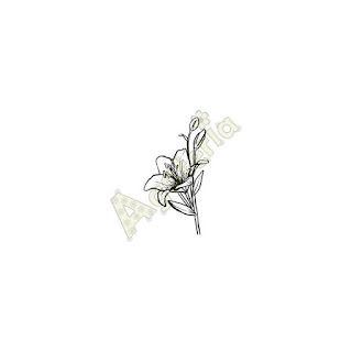 http://sklep.agateria.pl/kwiaty/610-lilia-5902557823994.html
