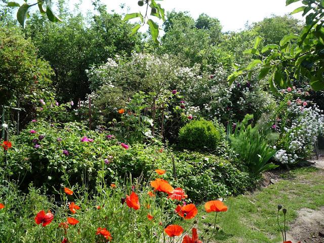 Forest garden plantings