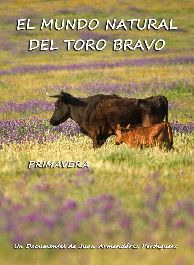 DOCUMENTAL. EL MUNDO NATURAL DEL TORO BRAVO. PRIMAVERA