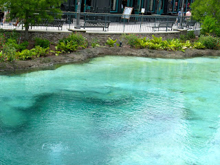 The Springs at Disney Springs