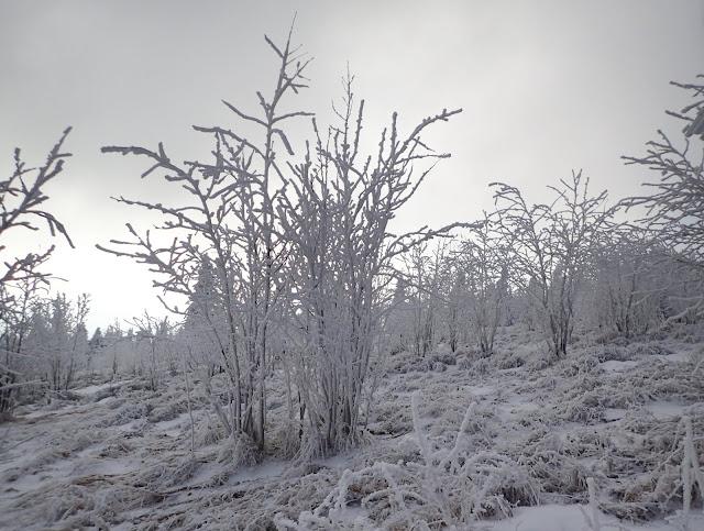 Zimowy Ćwilin (Polana Michurowa)