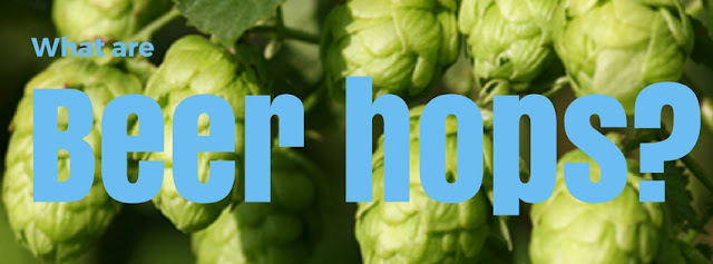 what beer hops to use with beer