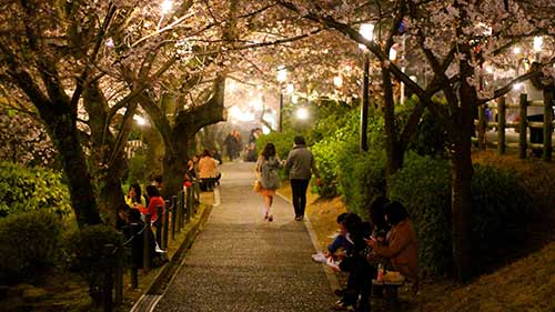 Okazaki Cherry Blossom Festival, Aichi.