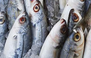 Να φοβόμαστε το ψάρι;