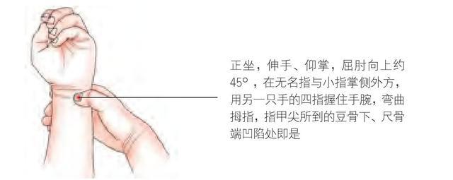 中醫介紹:陽池穴,神門穴,糖尿病人的保健穴!(高血糖) - 穴道經絡引導