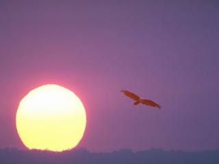 Horizonte vermelho ao pôr do sol amarelo e pássaro a voar. http://belverede.blogspot.com.br