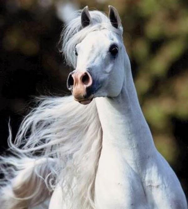 FOTOGRADUS: Лошадь — это поэзия в движении (20 фото)