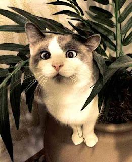 Cat sees dinner