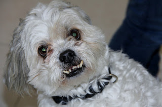 How To Take Care Of Your Senior Dog's Teeth
