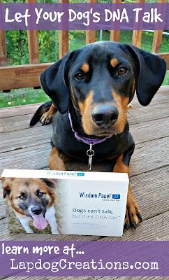 doberman mix dog wisdom panel dna