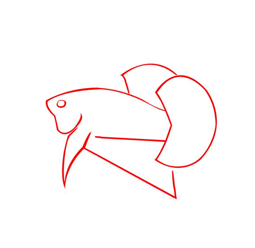 Betta 138 Kriteria Ikan Cupang Hias Kontes