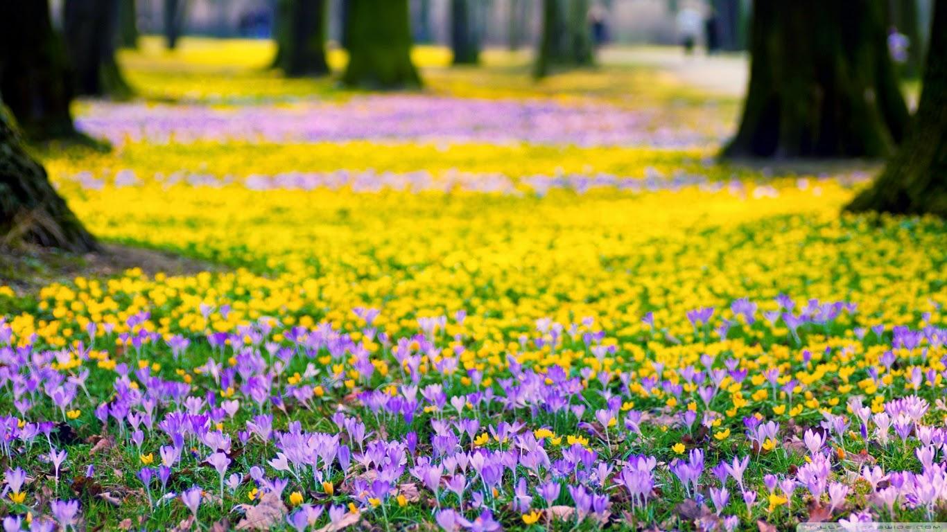 Fond d 39 cran printemps fond d 39 cran hd - Taille du pecher au printemps ...