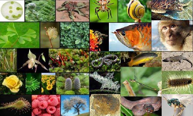 contoh keanekaragaman hayati