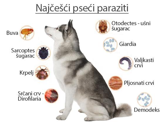 Pseci paraziti - Panvet Subotica