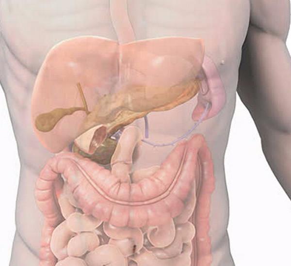 желудок часто сосет
