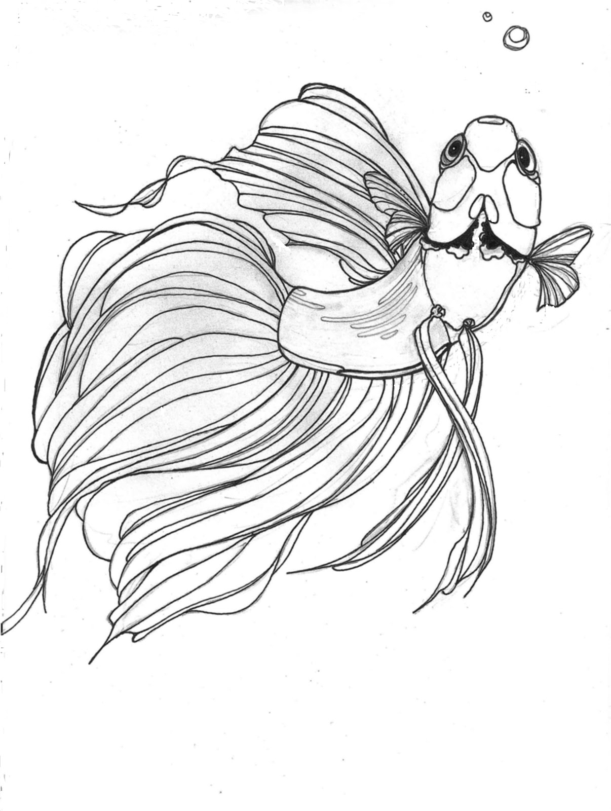 Desenhos do Peixe Betta para Colorir