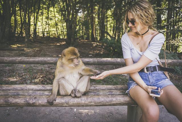 Beberapa Penyakit yang Bisa Ditularkan dari Monyet