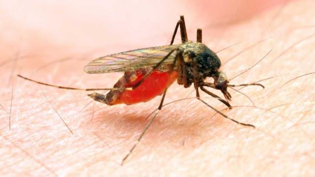 ظهور نتائج أول لقاح تجريبي للملاريا